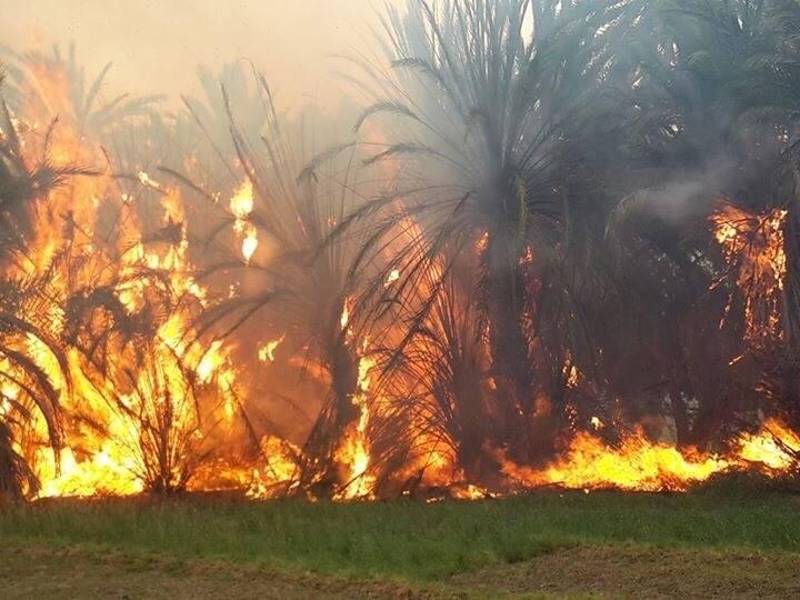 صورة حريق جديد يضرب واحة «تغمرت» يوم الخميس 28-07-2016