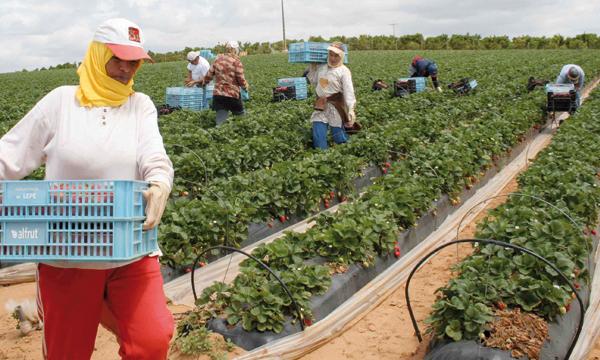 صورة زيادة الطلب على العاملات المغربيات في حقول ويلبا بإسبانيا للموسم الفلاحي 2017
